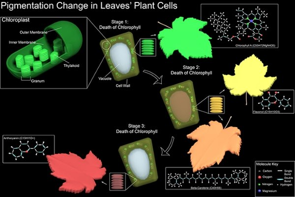 Pigmentation Changes in Leaf Cells by Sophia Monaco, 2019, 3ds Max and Adobe Photoshop